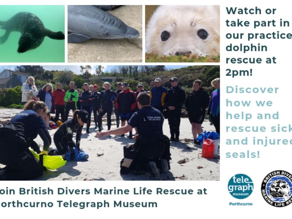 Marine Awareness Day with British Divers Marine Life Rescue