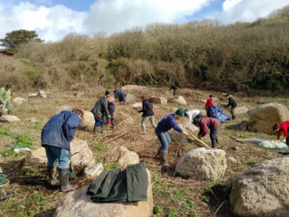 National Trust Partnership Working Day