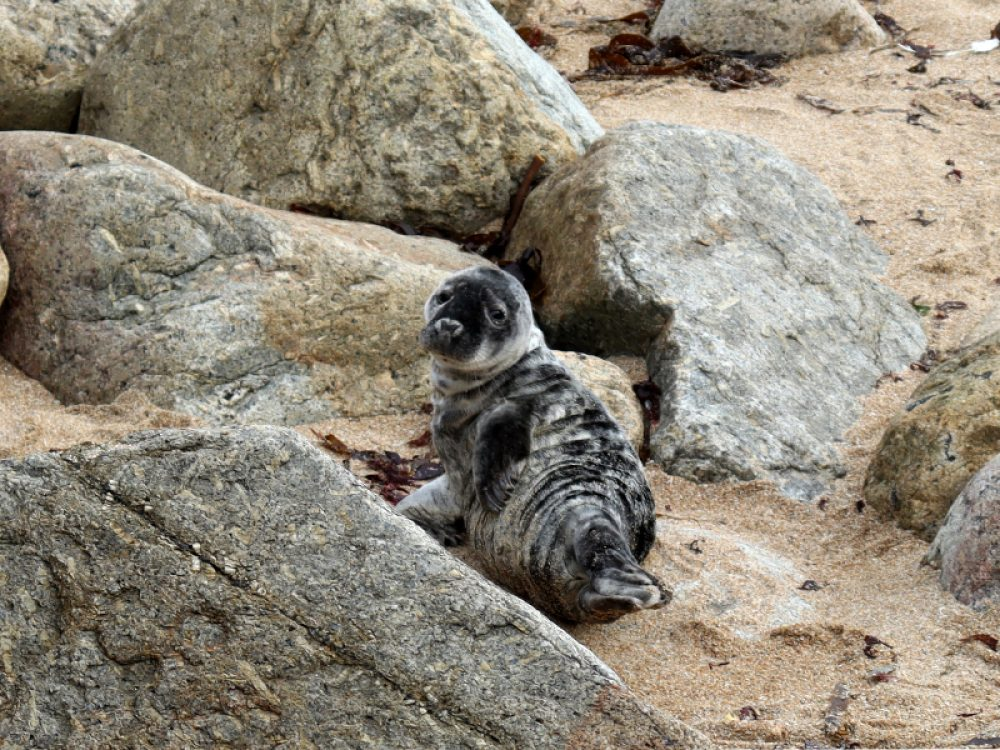 Grey Seals – Young Curator Blog
