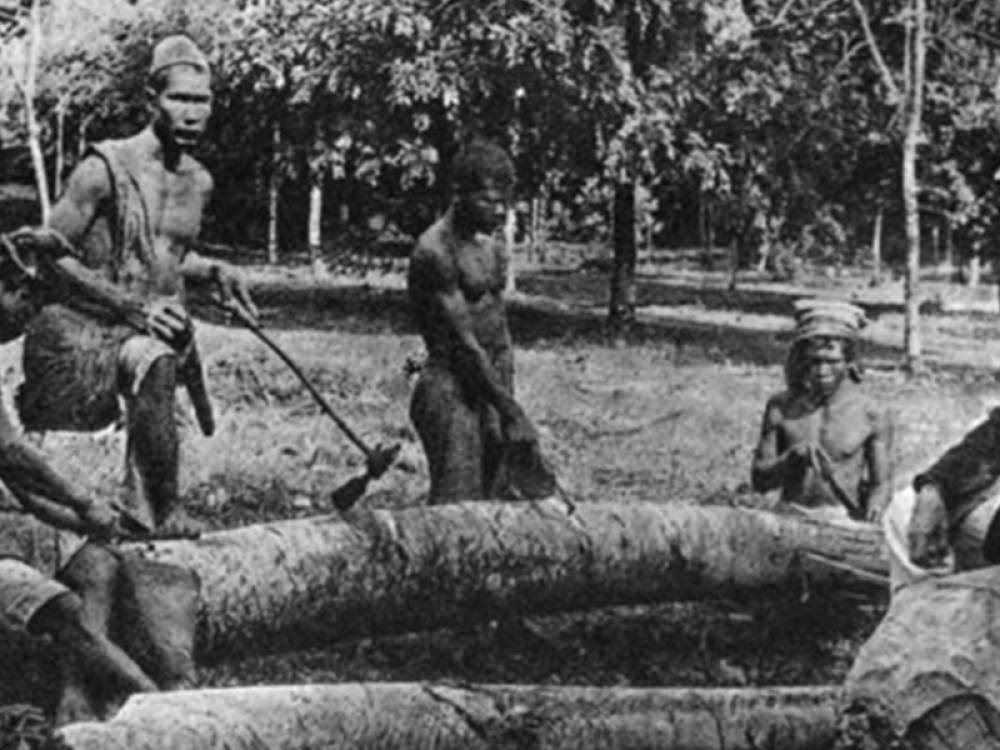 Extraction of Gutta Percha from the Trunk in Sumatra